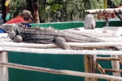 Cuba 2018 -  Zoo  (13)