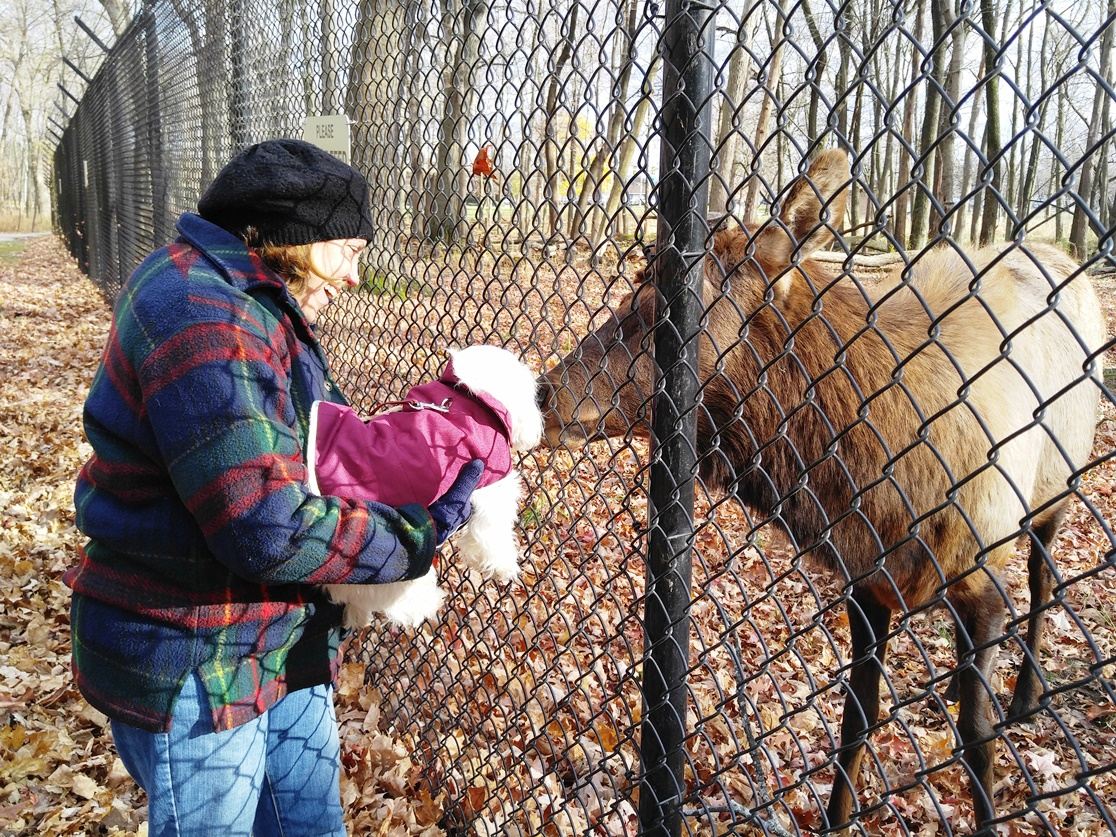 Carol and Pula and the Elk 3