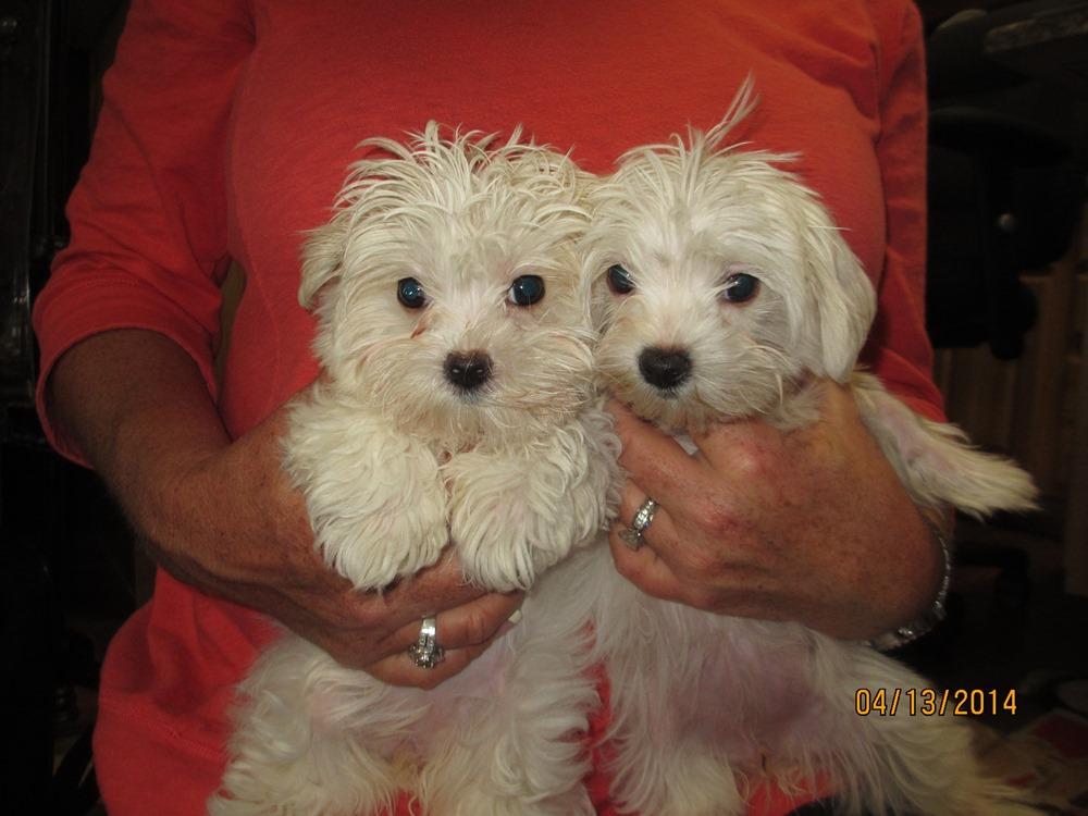 Chloe and Pula