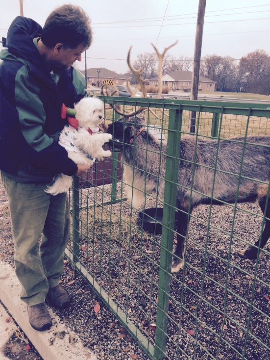 Pula and the Reindeer 2