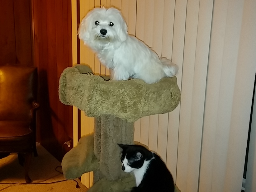 Pula on her perch