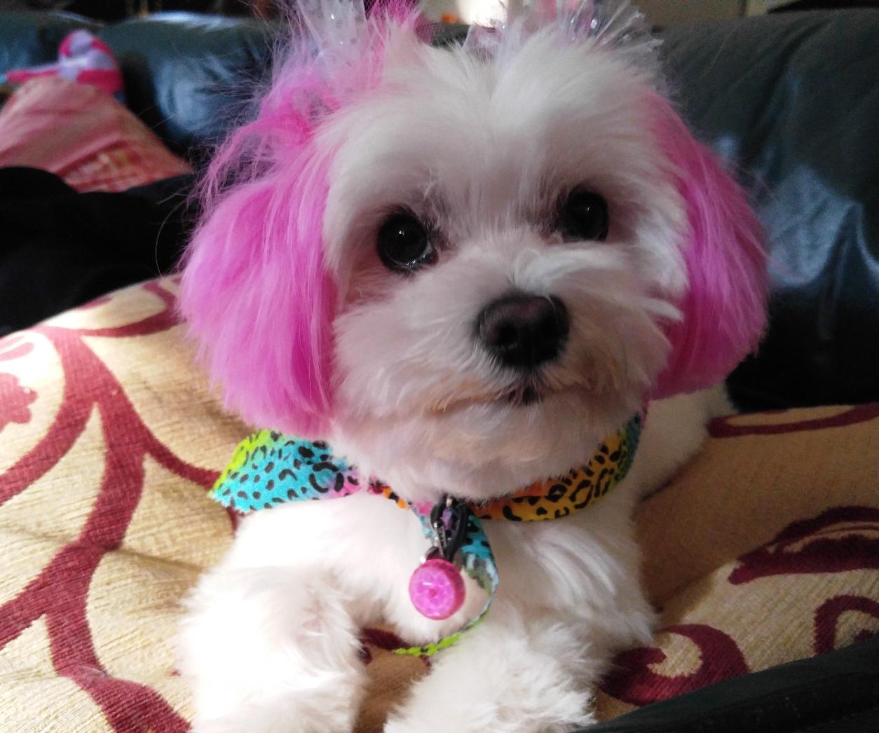 Pula with her purple ears 1