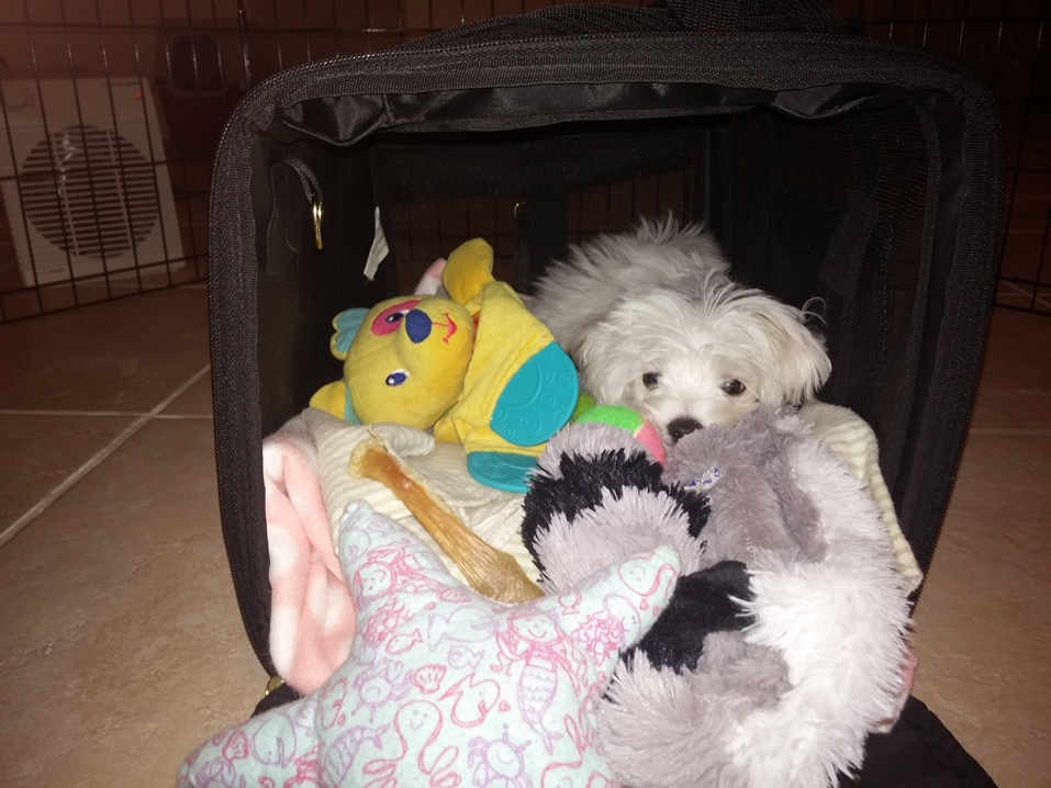 Pula with toys