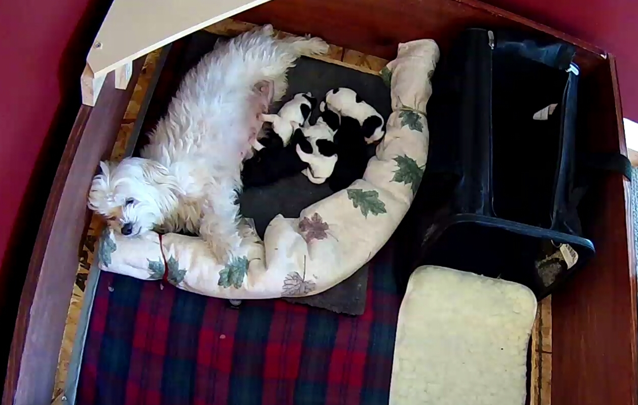 Puppies 1 week 1