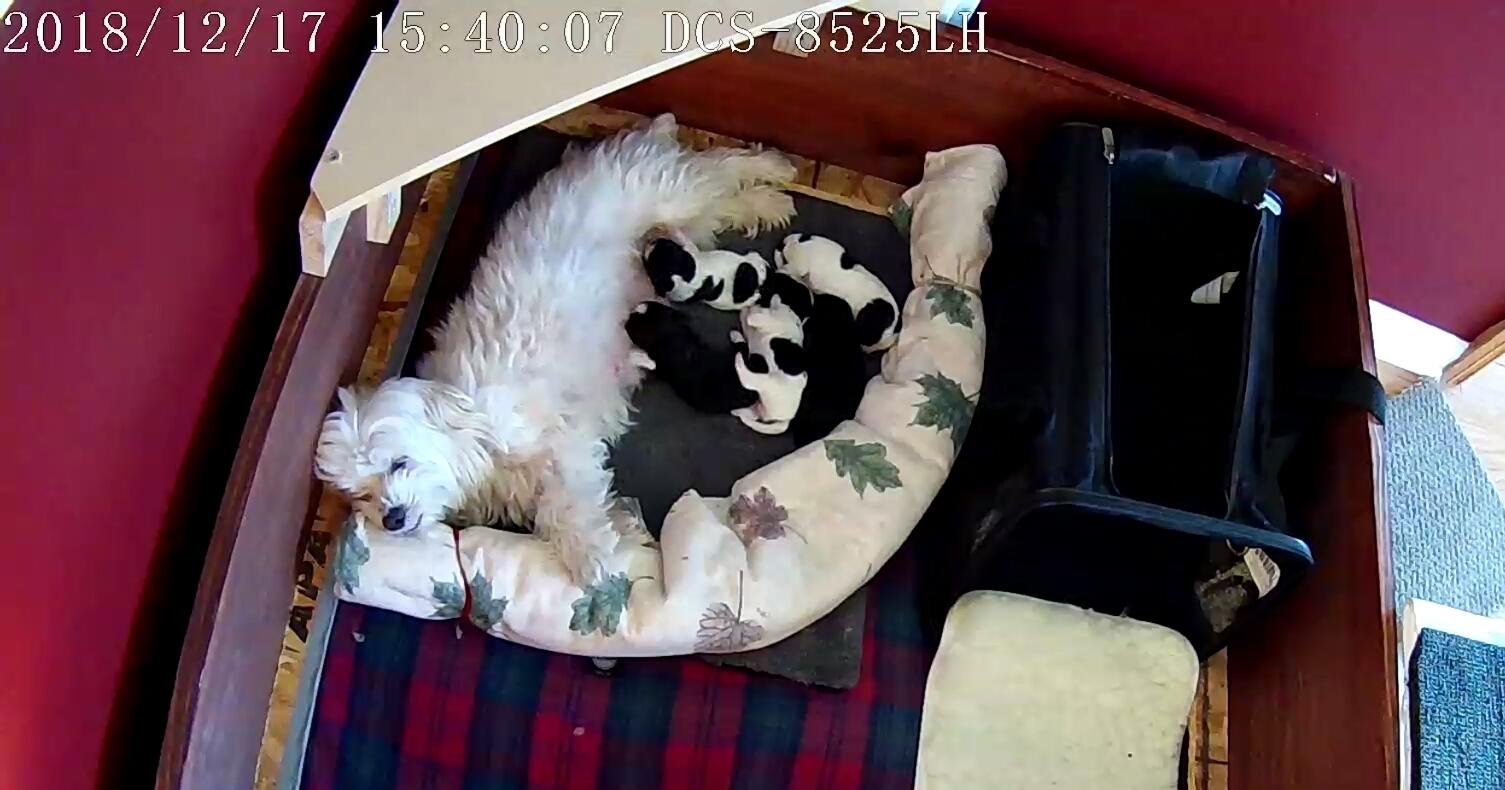 Puppies 1 week 3