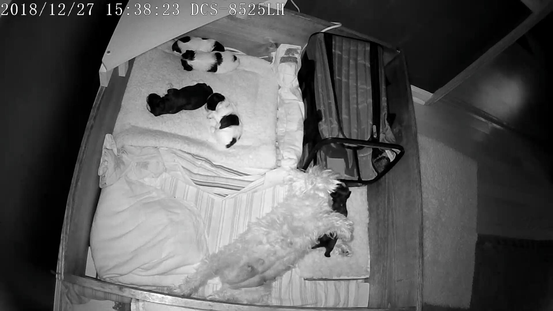 Puppies 1 week 4