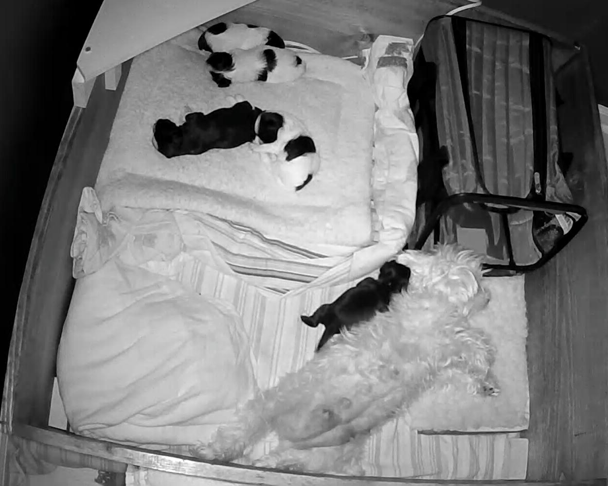 Puppies 1 week 5