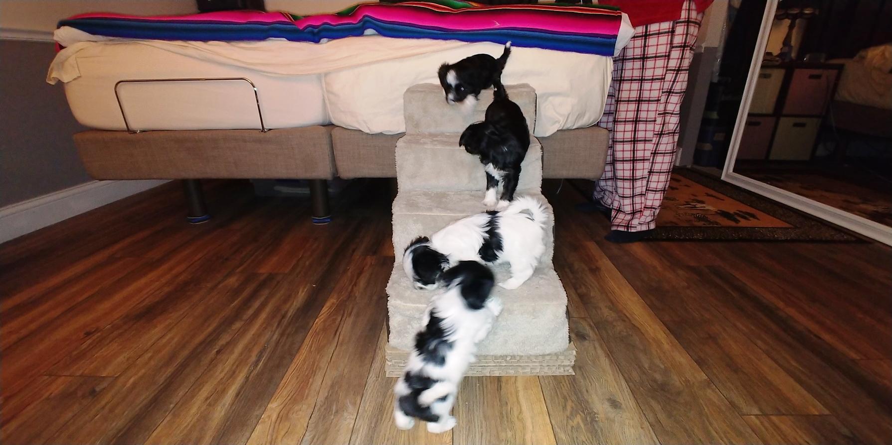 Puppies at 6 weeks (1)