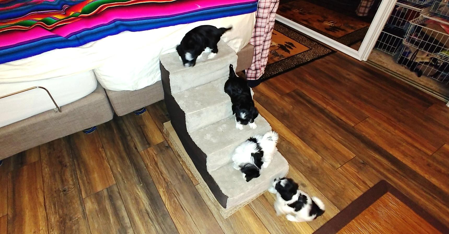 Puppies at 6 weeks (5)