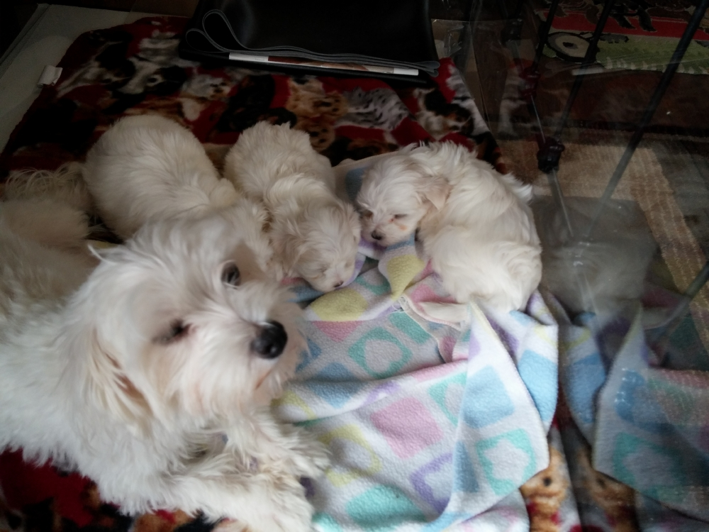 Pups 4 wks 13