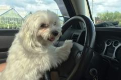 Pula Driving