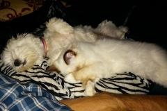 Pula and Lea