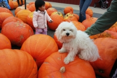 Pula and the Pumkins 2
