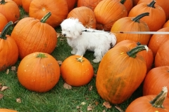 Pula and the Pumkins 3