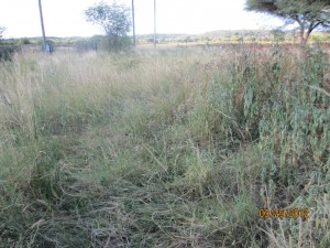 3 Feet Tall Grass - Before