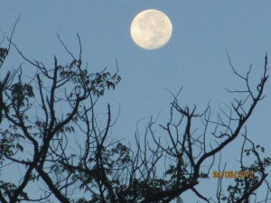 Morning moon is still bright at 7:30 AM