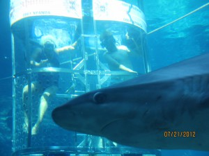 Karla and Adam in the Shark cage!
