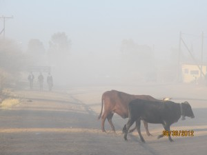 The last mile before school requires each child to breath in at least 1T of dust and dung
