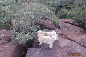 puppies on rocks