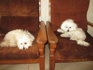 Rati and Phoenix after grooming