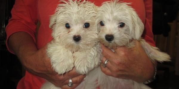 Pula and sister, Chloe
