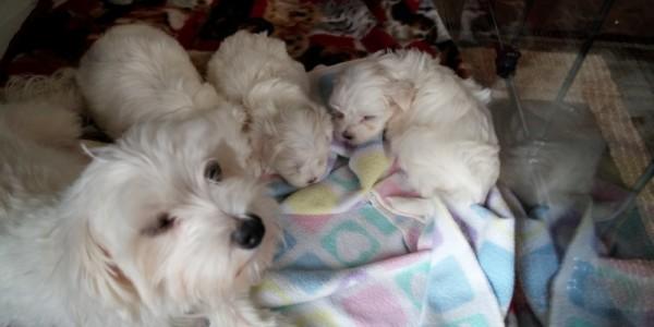 Pula's family at 6 weeks