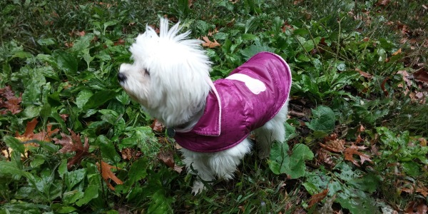 Pula in Pink